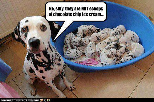 DOGGIE ICE CREAM
