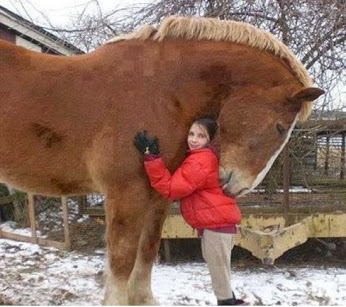 LITTLE GIRL WITH A BIG HORSE
