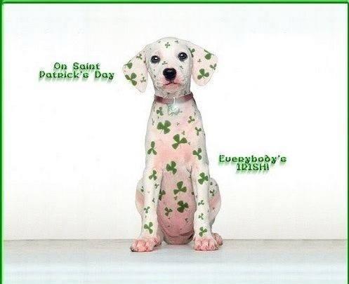 ST. PATTY'S DAY DOG