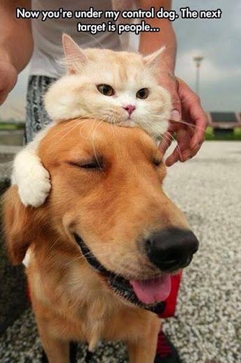 CAT'S IN CONTROL