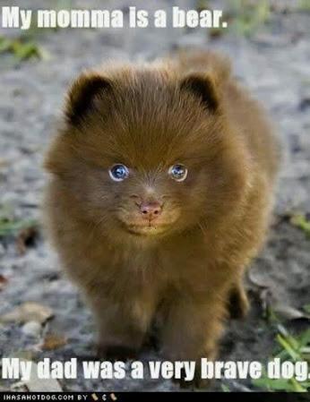 DOG-BEAR