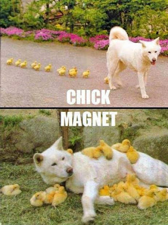 easter chick magnet