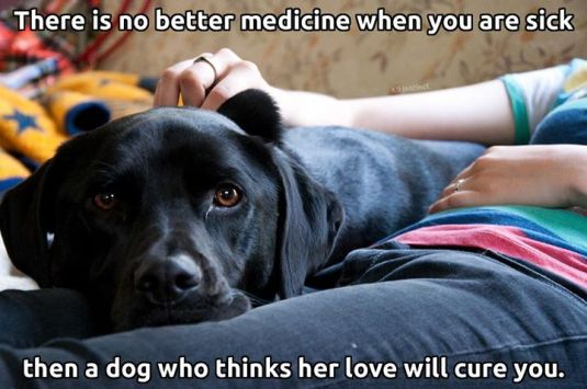 DOG'S LOVE WILL CURE YOU