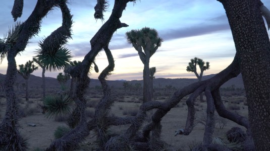 JoshuaTreeDec2015EarlyMorning4K