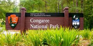 congaree-national-park1