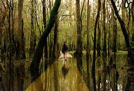 congaree-national-park2